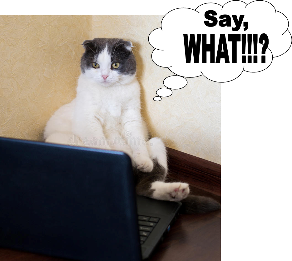 cat looking astonished at computer screen